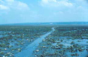 Mud flats and channel