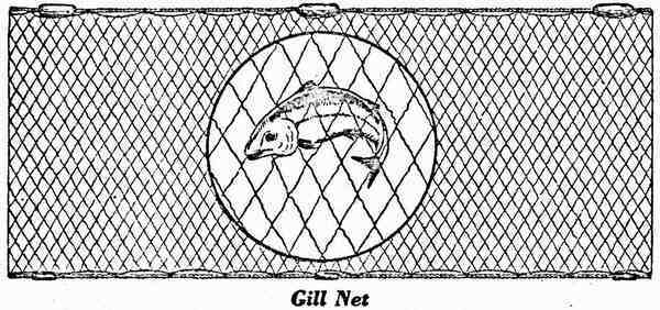 diagram of a gill net