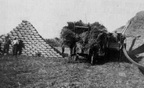 Threshing on the Loney farm 1904