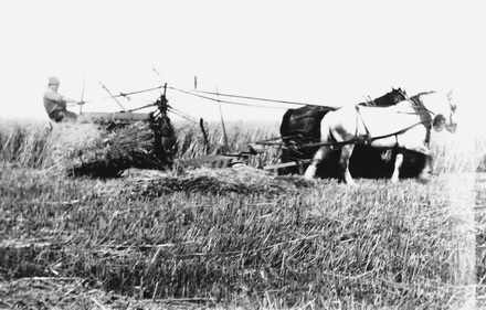 Bert McBride cutting hay in Mud Bay